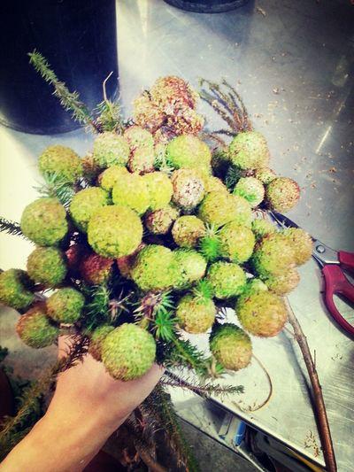 Flowers#nature#hangingout#takingphotos#colors#hello Worldflorafauna F Taking Photos My Life