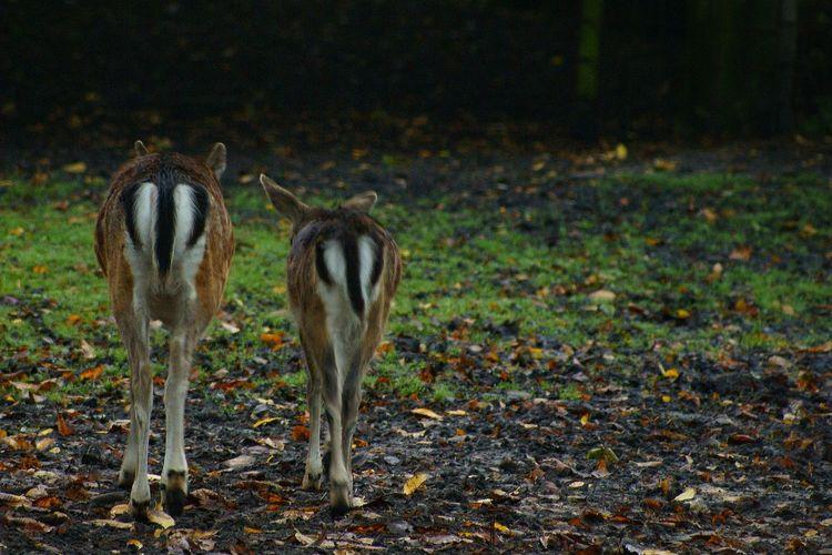 Deer Sunlight