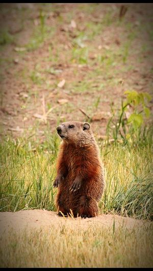 Groundhog wasnt to sure what i was doing