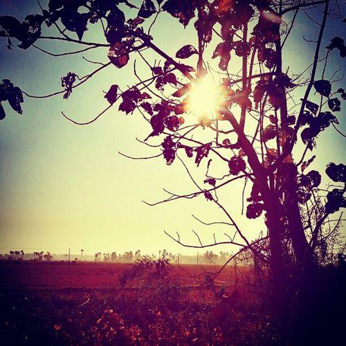 Sunny Sun Suy Through leavestreesdesertvillagestravelgramexpresswayfallingautumnburmeseigersinstahubwebstagramHDRpicofthedayinstamyanmarinstadaily