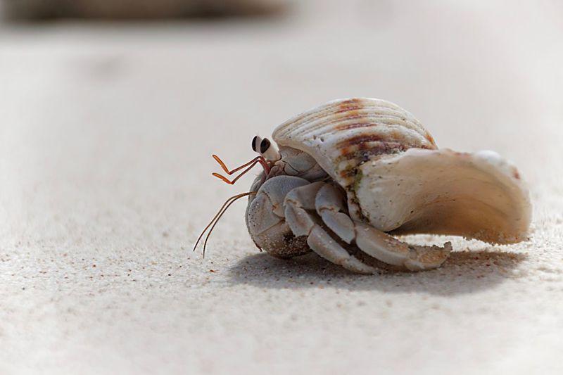 Animal Themes Animal Animal Wildlife Animals In The Wild One Animal Close-up Crustacean Sand Beach Nature