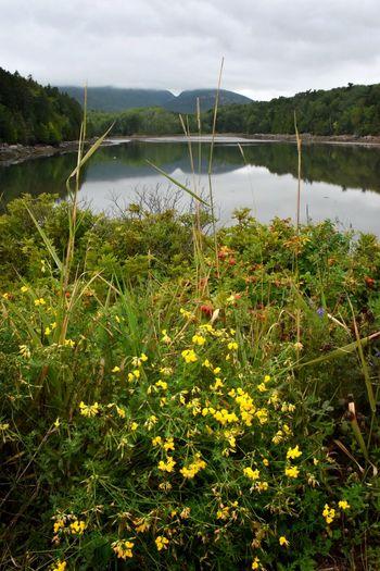 Acadia Acadia National Park, ME Cloudy Mountain Peaks Cloudy Mountains Cloudy Sky Maine Reflection Wildflowers In Bloom Acadia National Park Clouds Mountains Reflection In Water Reflections Reflections In The Water Scenic Landscapes Scenic View Scenics - Nature Wildflowers