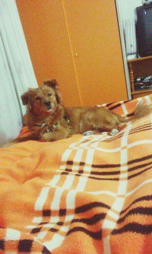 Dog Love Hena