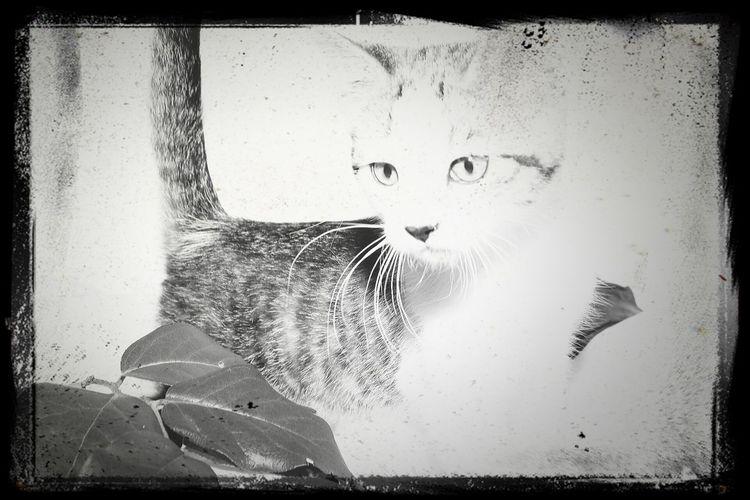 Cat♡ Kitten Kitty!  Katze