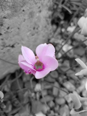EyeEm Nature Lover EyeEm Best Shots EyeEmNewHere Flower Head Flower Pink Color Petal Close-up Plant Flowering Plant Stamen Plant Life Botany