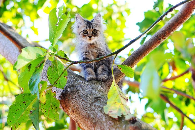 Kerokanpictures Cat Lovers Cats Of EyeEm Cats 🐱 Cat Animal Themes Persian Cat  Tree Perching Portrait Looking At Camera Branch Close-up