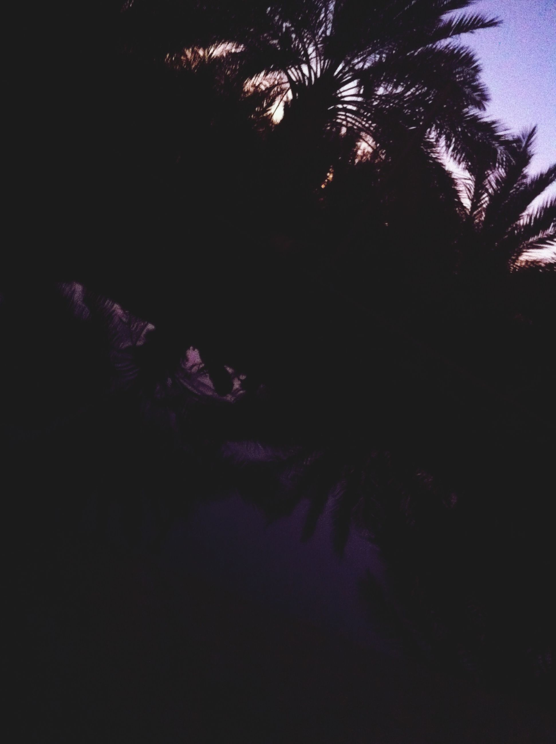 tree, silhouette, night, beauty in nature, growth, low angle view, tranquility, nature, tranquil scene, scenics, dark, sky, clear sky, branch, copy space, no people, outdoors, palm tree, dusk, idyllic