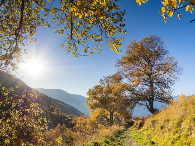 Autumn Colors Back Lit Beauty In Nature Day Forest Gold Colored Landscape Lens Flare Mountain Mountain Range Muntain Nature No People Outdoors Refraction Scenics Sky Summer Sun Sunbeam Sunlight Sunset Tree Trees