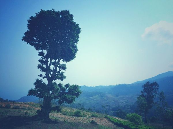 Tree Mountain Pinaceae No People Pine Tree Sky Outdoors Tranquility Nature Landscape Beauty In Nature Day Scenics EyeEmNewHere Travel Photography LoveTravel Noperson Clear Sky Travel Destinations Transportation Mobilephotographyph Beauty In Nature India Refreshment Nature The Great Outdoors - 2017 EyeEm Awards
