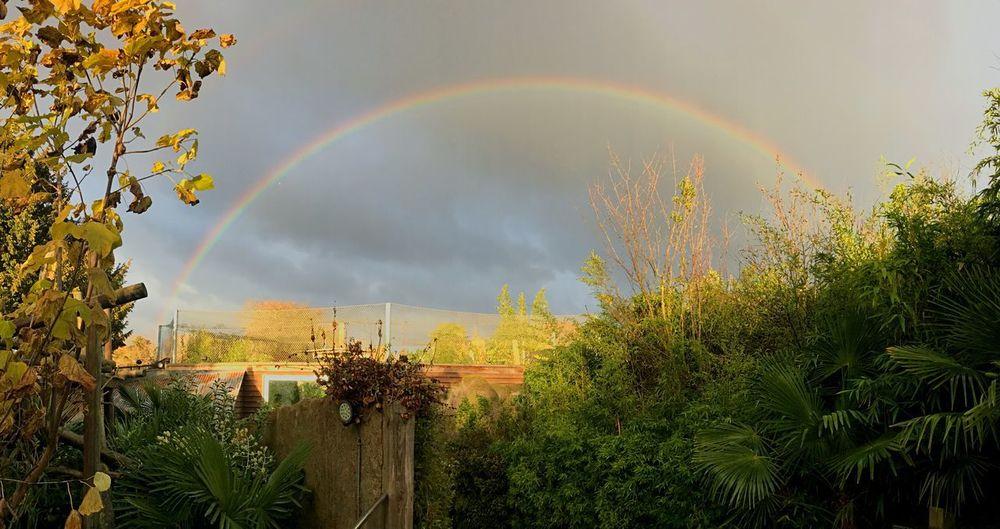 Rainbow Tree Plant Beauty In Nature Sky Cloud - Sky Nature Scenics - Nature Outdoors