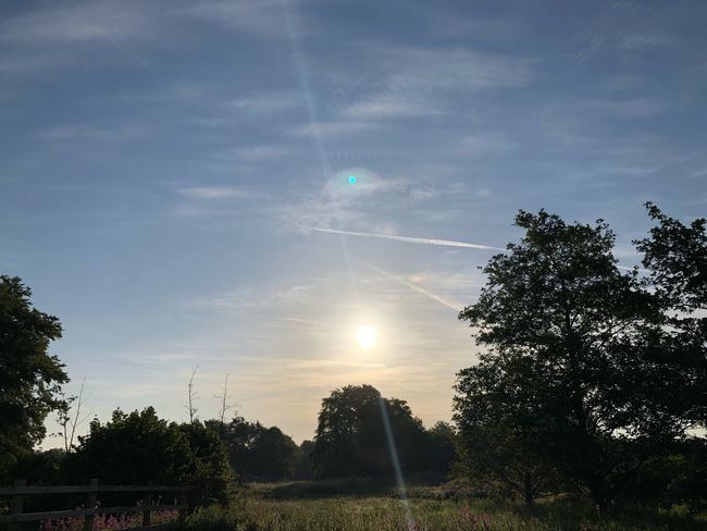 Morning #MobileSky #sunrise #sky #clouds #sun Tree Plant Sky Cloud - Sky Nature Sunlight Beauty In Nature Growth Tranquility Low Angle View Field Day Outdoors Lens Flare Silhouette Sun No People Scenics - Nature Sunbeam Tranquil Scene