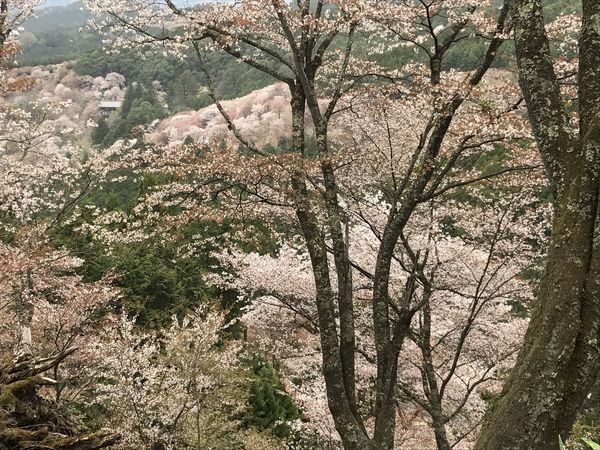 EyeEmNewHere Beauty In Nature Branch Close-up Day Flower Fragility Freshness Growth Low Angle View Nature No People Outdoors Scenics Sky Springtime Tranquility Tree