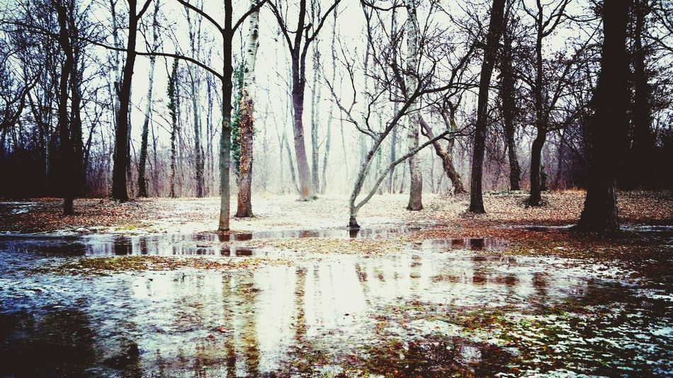 Melting Snow Tree Nature Water Scenics Beauty In Nature No People Outdoors Tranquil Scene Tranquility Sky Day Close-up Hello World ✌ Green Color Park Life Landscape Forest Spring Is Coming  Winter_collection Winter Landscape Nature Tree Trunk Snow ❄ Winter Tranquility Resist The Secret Spaces EyeEm Diversity