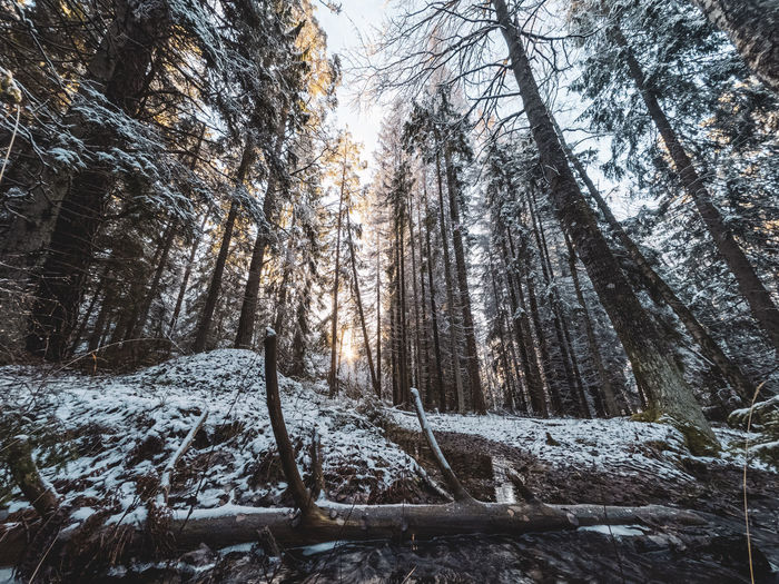 Low angle view of frozen trees in forest