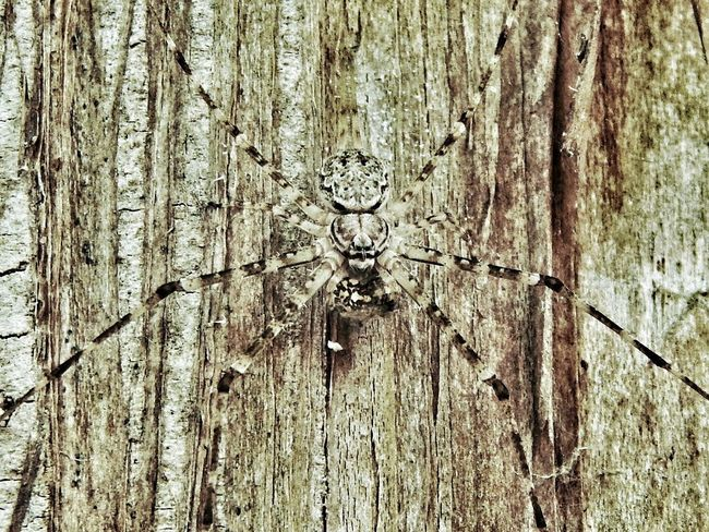 The Great Outdoors - 2016 EyeEm Awards Spider HuntsmanSpider Arachnid Treebark Undercover See What I See ? Man Face Moustache Compare .com Garden Nature On Your Doorstep Hello World
