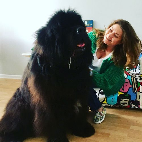 Puppy Newfoundland малыш Special Guest Doggy Time Dog
