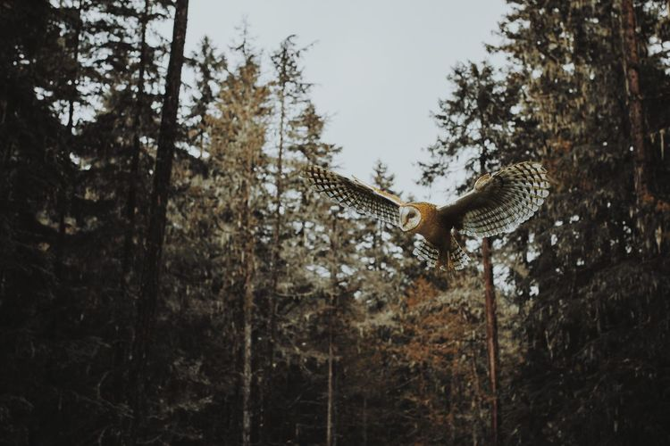 Bird flying in a forest