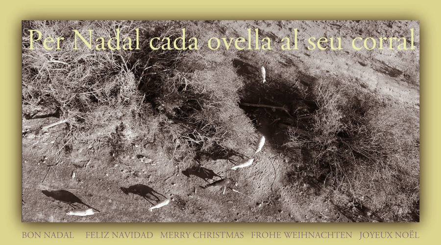 Bon Nadal Per A Tots Feliz Navidad Para Todos Frohe Weihnachten Für Alle Joyeux Noël à Tous Merry Christmas For All