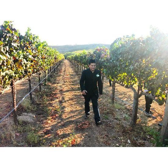 O.o Winecountry Ñapa NoCal California