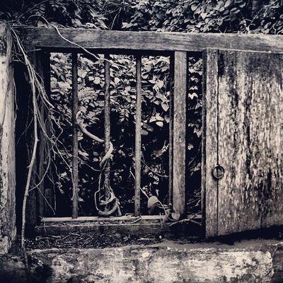 Broken window, Sandeepmv , Canondigest , Canondigest , 08884922253 , sandeepkumarfotography, instalike, instadaily