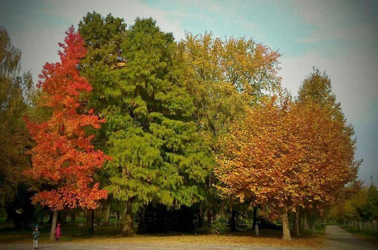 Autumn Balaton ősz