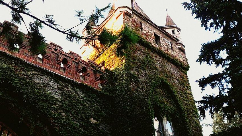 Building Exterior Architecture Low Angle View Outdoors Built Structure Nature Architectural Design Budapest, Hungary Castle Ruin Castle Gate