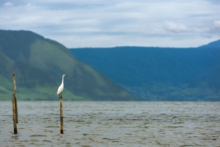 Bird Perching On Wooden Post In Sea Against Mountains