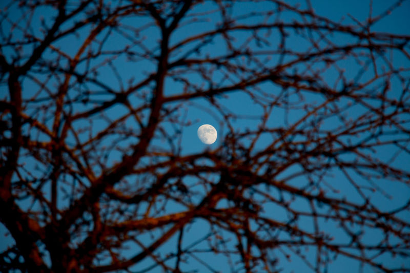 Moon Moon Moon In Tree Branches And Moon Branch Branches