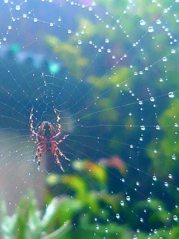 Spiderwebs and raindrops.. Spider Web Close-up Web Raindropshot