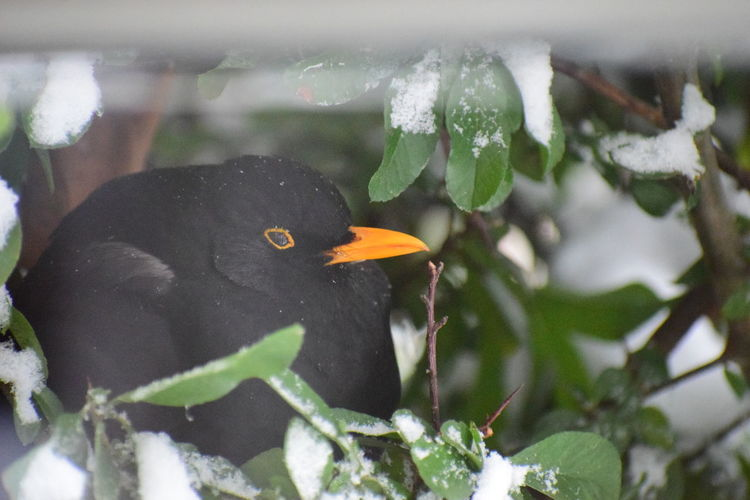 Close-up of a bird in snow