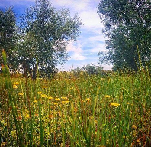 Salento Ortelle Nature Natura Campagna Fiore Fiori Puglia Italia Italy Flower Flowers Primavera Spring Olivo Olive