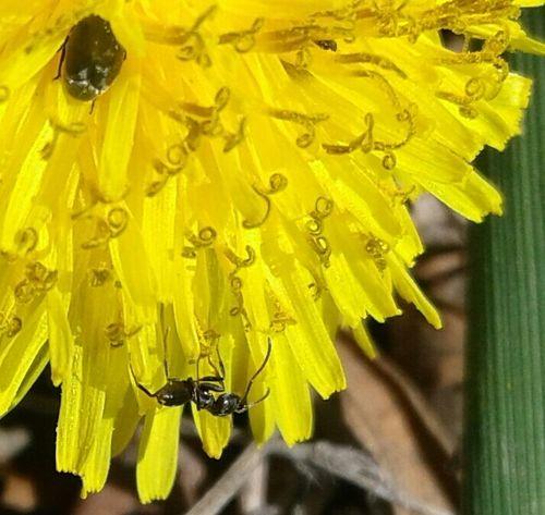 Yellow Close-up Flower Gold Colored Flower Head Bugs EyeEm Nature Lover EyeEmNewHere EyeEm Diversity Romania Ants