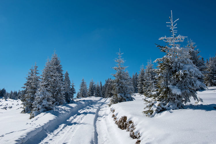 Idyllic view of snowcapped landscape and trees against blue sky