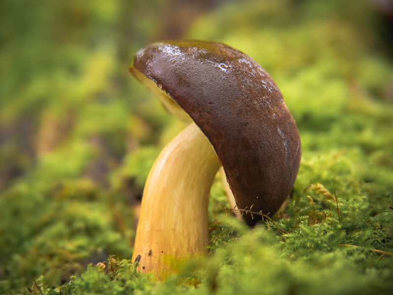 Autumn Marierichphotography Olympus Beauty In Nature Close-up Day Fall Field Focus On Foreground Freshness Fungus Grass Green Color Growth Mushroom Nature No People Outdoors Single Mushroom Slug Toadstool