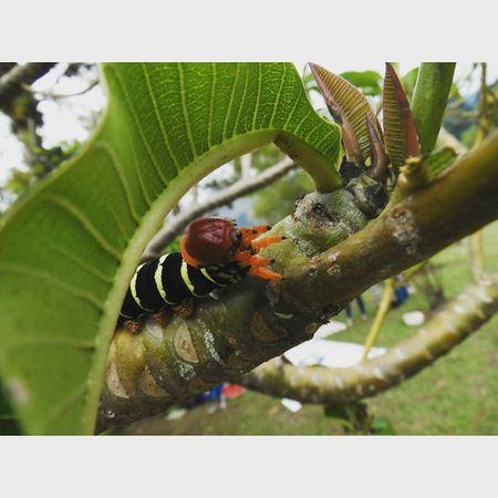 Betosalvestrini Mérida Ula Jardinbotanico Nature Quickphoto Abugslife Bugs Chilling Hi Green Art Rcnocrop