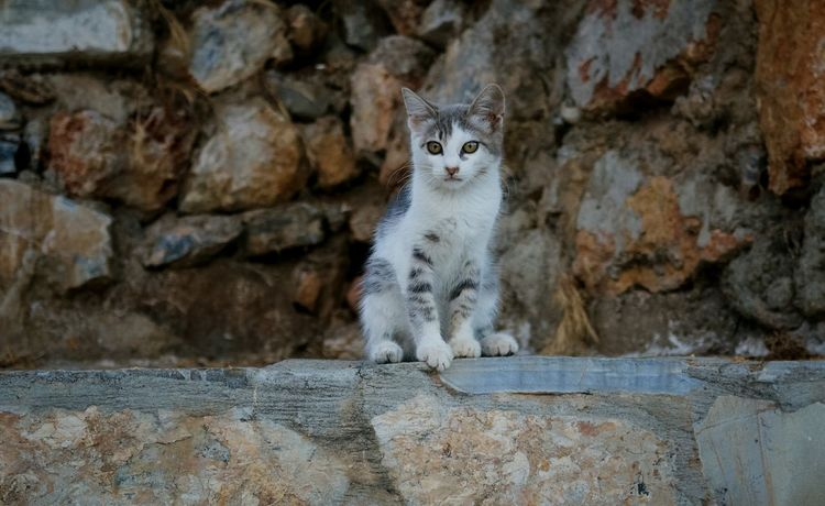 Cat Katze Tiere Cute Canon Canonphotography EyeEm Nature Lover Tiere/Animals Hauskatze EyeEm Gallery Domestic Cat Feline Looking At Camera Sitting Animal Themes Outdoors Day