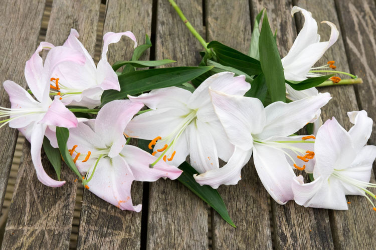 Beauty In Nature Blossom Bunch Of Flowers Close-up Day Flower Flower Head Fragility Freshness Lilies Lillies In The Landscape Lily Lily Flower Nature No People Outdoors Petal Planks Plant Rugged Rustic Stamens Table Wood - Material Wooden