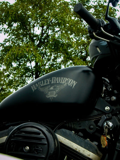Harley Davidson lovers Transportation Day Tree No People Outdoors Close-up Harley Davidson HD Sportster Iron883 Rider HarleyDavidsonMotorcycles Harley Davidson Sportster Harley-Davidson Cruiser Bikes Bikes Big Bikes