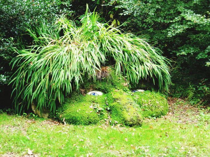 Giant's Head, Lost Gardens of Heligan Gardens ArtWork Cornwall Garden HEAD Cornwall England Uk Giant Eyes Nose