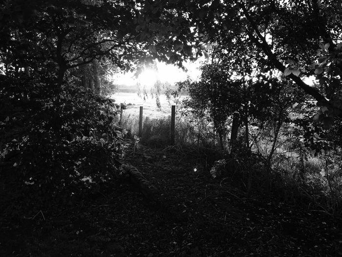 Woods Sunset