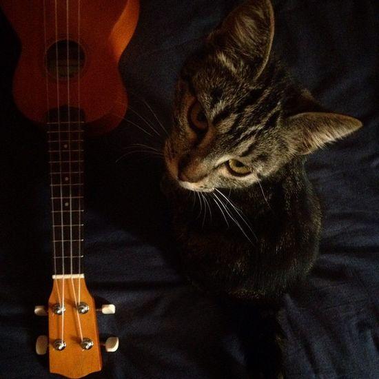 Caterina Cat Thug Thuglife ukulele music nofilter Pisa eyes strings gatti gattini gattetti