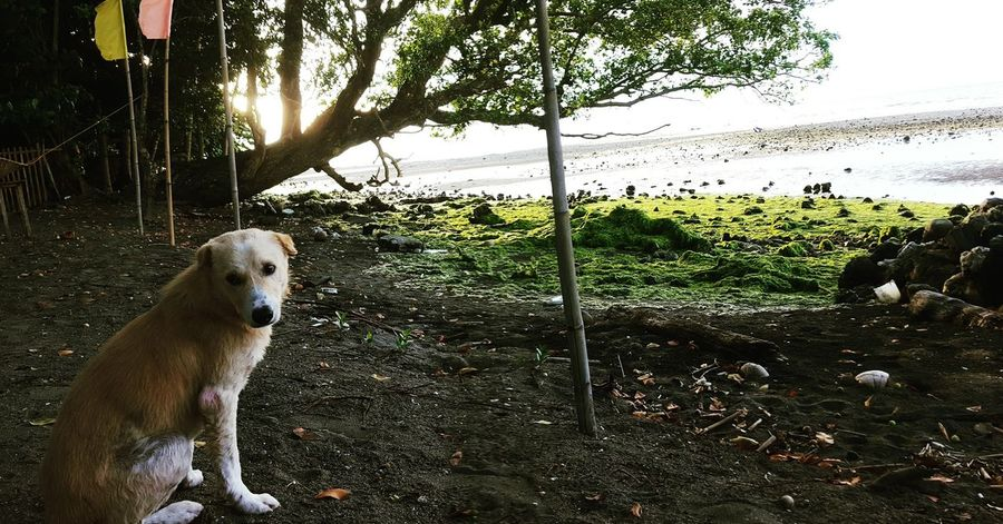 Dogs Scene Afternoon Scenery Beach Sunset Family Shore Chill Chilling Pets Relaxing Enjoying Life Philippines Camiguin Nature Mansbestfriend Jellosseacottages