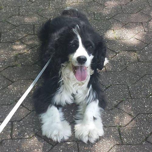Bob 💕 🐶 💕 Dog Hund Bob Cute Cutedog Meinliebling Sosüß 😍 💞