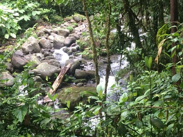 Water Light Costa Rica Growth Nature Plant Outdoors No People Green Color Day Beauty In Nature Tranquility Scenics Tree