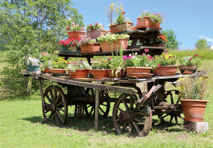 very old wooden cart festooned with many pots of flowers in the meadow Garden Flowers Gardening Trentino Alto Adige Trento Beauty In Nature Bolzano Chariot Decoration Far West Floriculture Flowers Garden Garden Equipment Garden Photography Growth Nature Outdoor Outdoor Photography Outdoors Plant Potted Plant