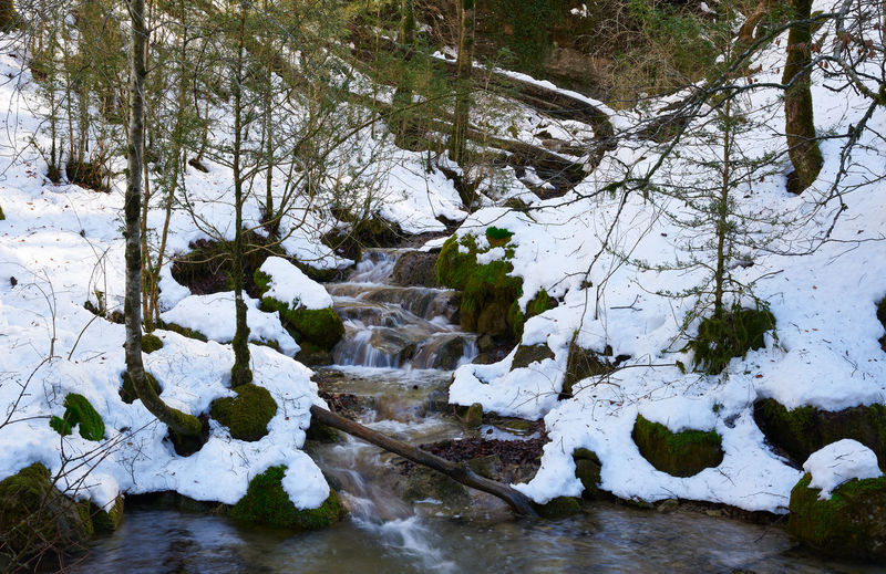Scenic view of river in forest during winter
