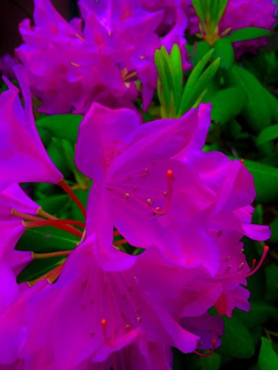 """""""Floral Magic"""" 3714 Neon Pink Abstractions In Colors Abstract Art Abstract Flower Flowers Flowers,Plants & Garden Petals Glow Macro Rhododendron Pink And Green Pink Flower"""
