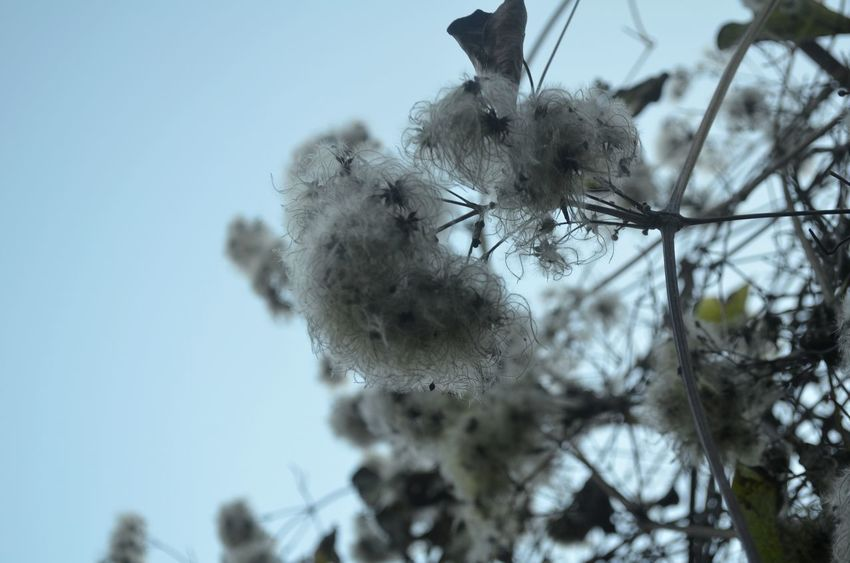 Nature Sky Tranquility Growth Outdoors No People Tree Plant Close-up Day Winter Gray Fragility Nature Beauty In Nature