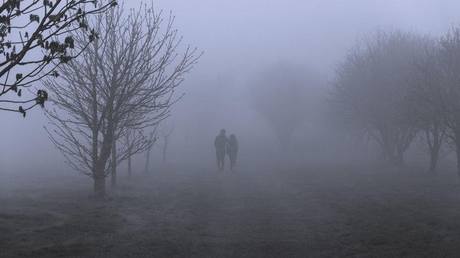 Tree Winter Fog