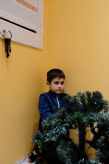 Boy looking at christmas tree